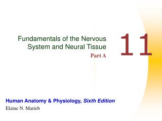 Fundamentals of the Nervous System and Neural Tissue Part A