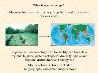 What is macroecology?