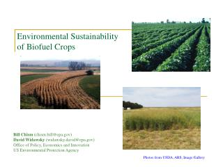Environmental Sustainability of Biofuel Crops