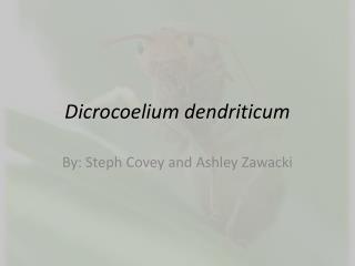 Dicrocoelium dendriticum