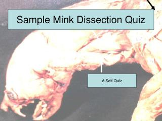Sample Mink Dissection Quiz
