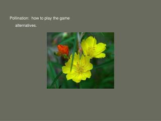Pollination:  how to play the game       alternatives.