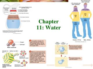 Chapter 11: Water