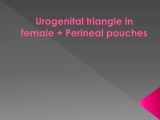 Urogenital  triangle in  female + Perineal  pouches