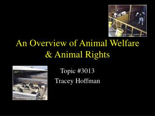 An Overview of Animal Welfare & Animal Rights