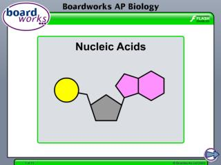Introduction to nucleotides