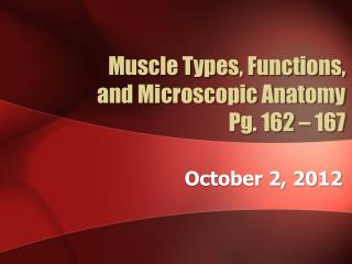 Muscle Types, Functions,  and Microscopic Anatomy Pg. 162 – 167