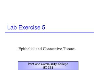 Lab Exercise 5