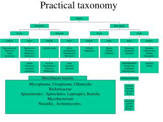 Practical taxonomy