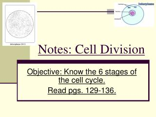 Notes: Cell Division