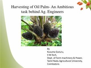 Harvesting of Oil Palm- An Ambitious task behind Ag. Engineers