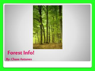 Forest Info! By: Chase  Antunes