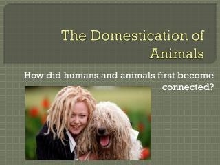 The Domestication of Animals