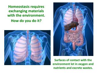 Homeostasis requires exchanging materials with the environment. How do you do it?