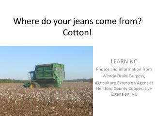 Where do your jeans come from? Cotton!