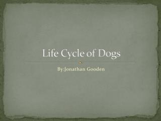 Life Cycle of Dogs