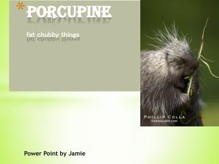 Porcupine fat  chubby  things