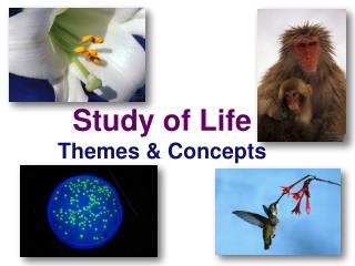 Study of Life Themes  & Concepts