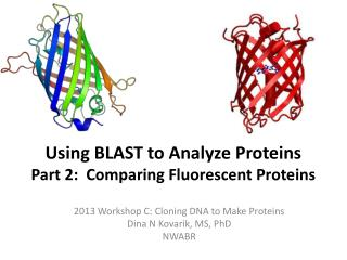 Using BLAST to Analyze Proteins Part 2:  Comparing Fluorescent Proteins