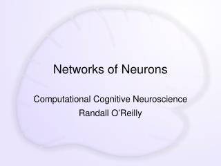 Networks of Neurons