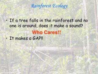 Rainforest Ecology