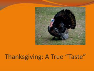 "Thanksgiving: A True ""Taste"""