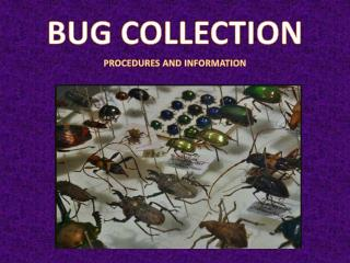 BUG COLLECTION