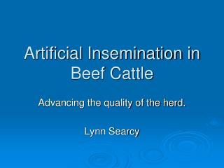 Artificial Insemination in Beef Cattle