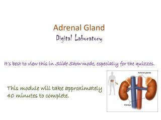 Adrenal Gland Digital Laboratory