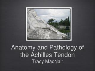 Anatomy and Pathology of the Achilles Tendon Tracy MacNair
