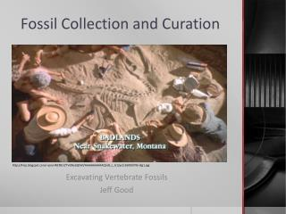 Fossil Collection and Curation