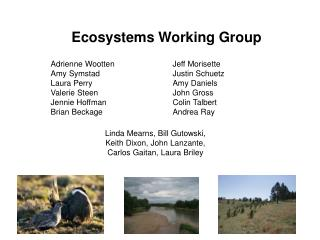 Ecosystems Working Group