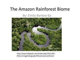 The Amazon Rainforest Biome
