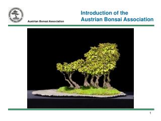 Austrian Bonsai Association