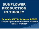 SUNFLOWER PRODUCTION  IN TURKEY