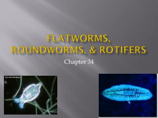Flatworms, Roundworms, & Rotifers