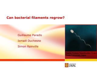 Can bacterial filaments regrow ?