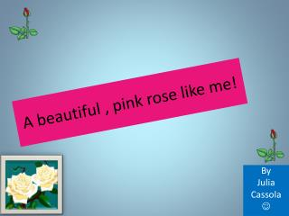 A beautiful , pink rose like me!