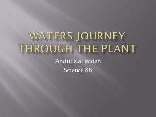Waters journey through the plant
