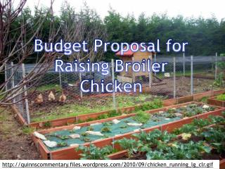 Budget Proposal for Raising Broiler Chicken