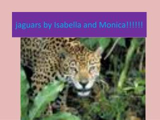 jaguars by Isabella and Monica!!!!!!