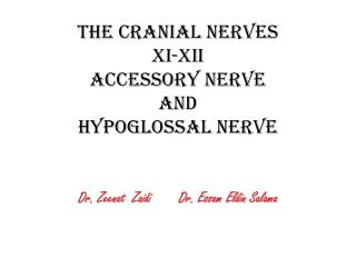 The Cranial Nerves XI-XII Accessory  Nerve and Hypoglossal Nerve