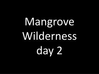 Mangrove  Wilderness day 2