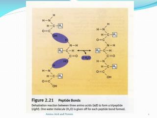 The portion of each amino acids remaining in the chain is called an amino acid residue