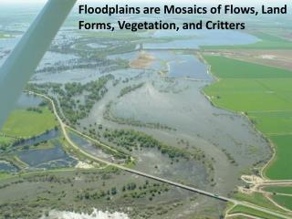 Floodplains are Mosaics of Flows, Land Forms, Vegetation, and Critters