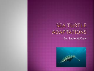Sea Turtle Adaptations