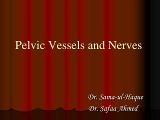 Pelvic Vessels and Nerves
