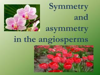 Symmetry  and  a symmetry in the  angiosperms