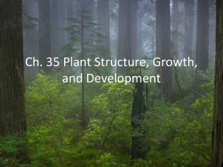 Ch. 35 Plant Structure, Growth, and Development