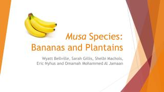 Musa Species: Bananas and Plantains